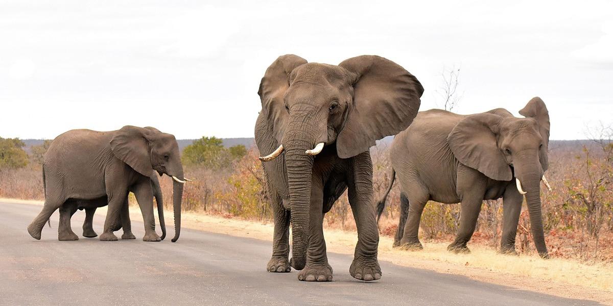 Visitar el Parque Nacional Kruger