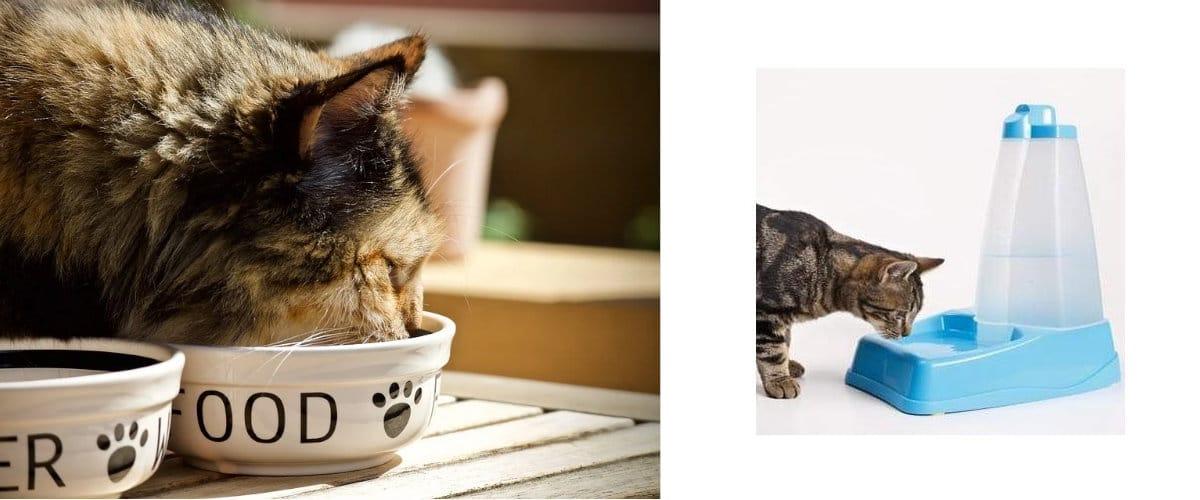 Accesorios básicos para gatos: Comedero y bebedero
