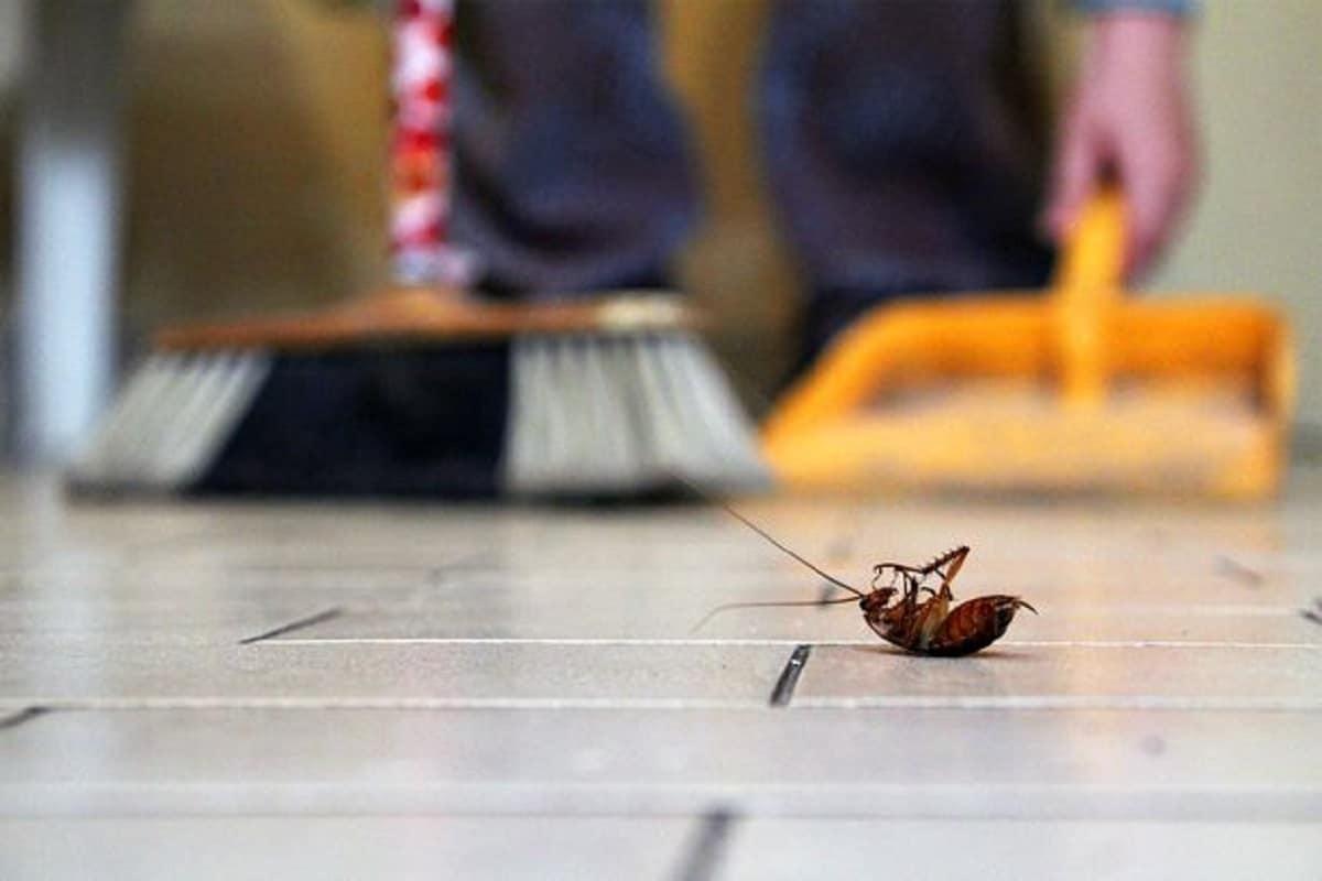 Evitar los insectos en casa