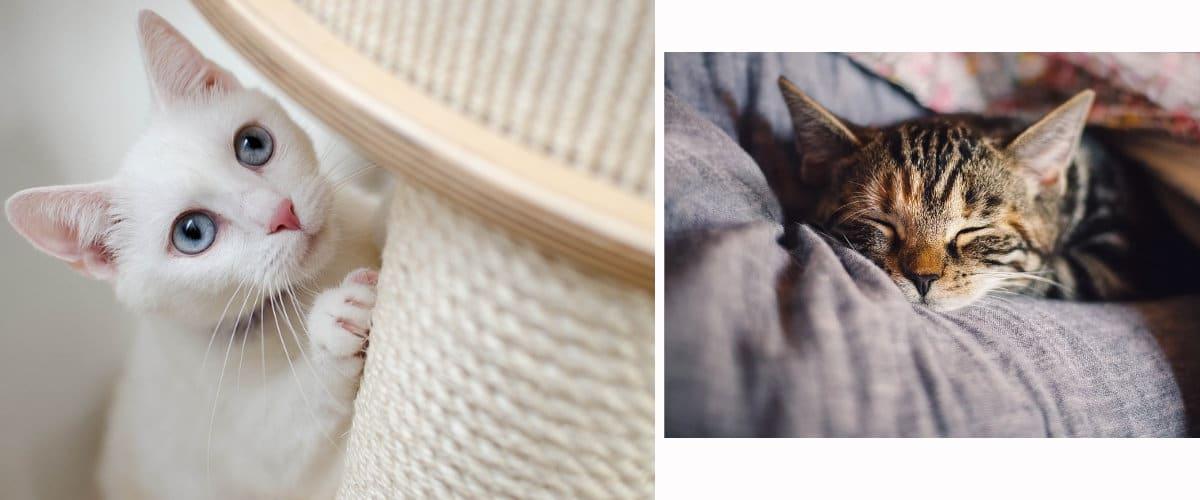 Accesorios básicos para gatos: Rascador y cama