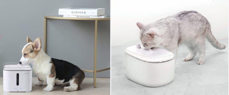 Fuentes de agua automáticas para gatos