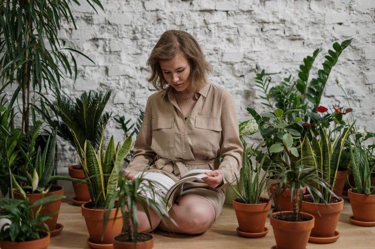 Plantas fáciles para tener en casa