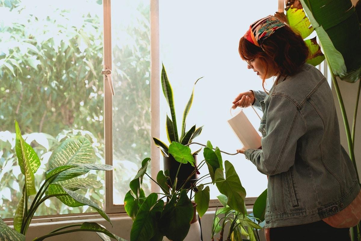 cuidar plantas de interior