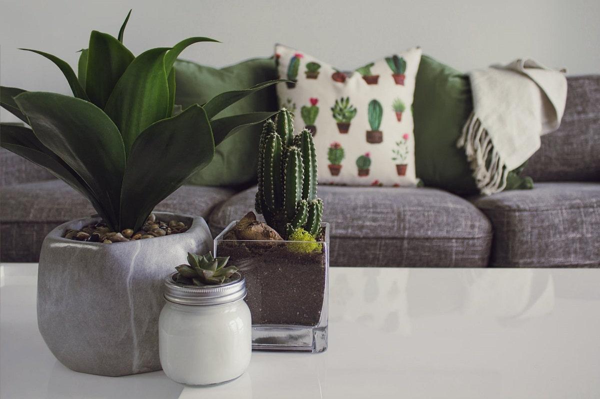 Plantas de interior fáciles de mantener