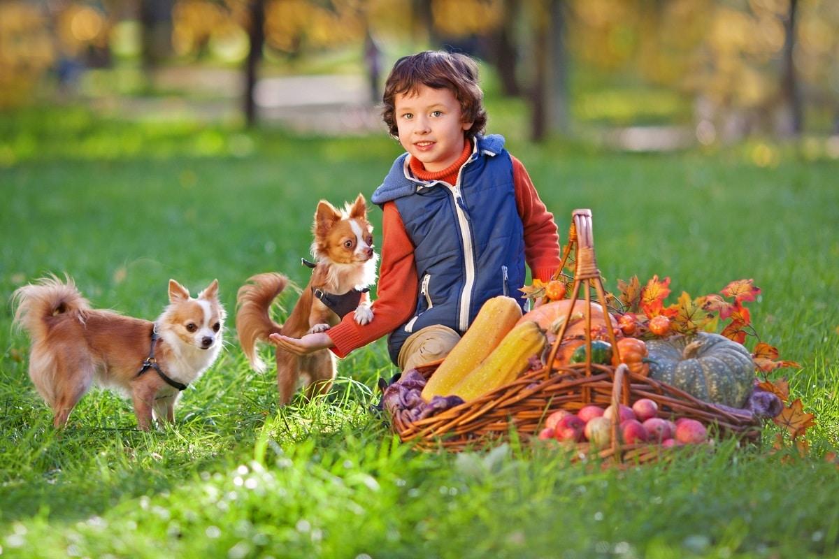 Beneficios para los niños de tener un perro