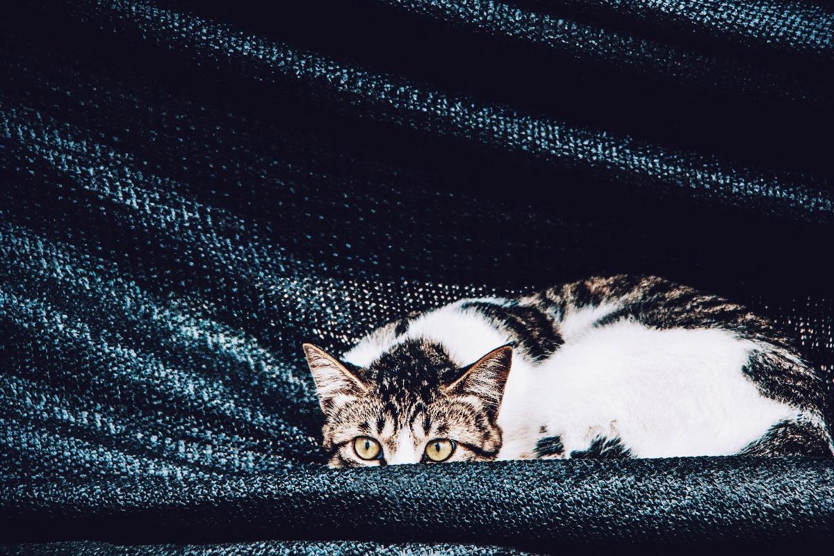Casa para gatos casera