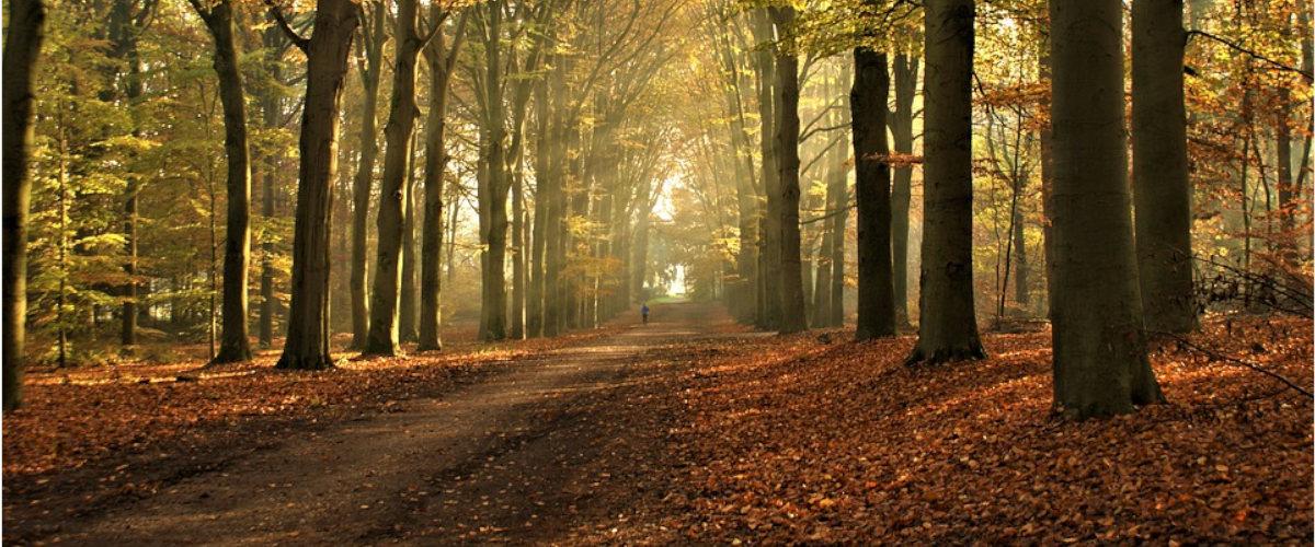 Actividades para realizar en otoño