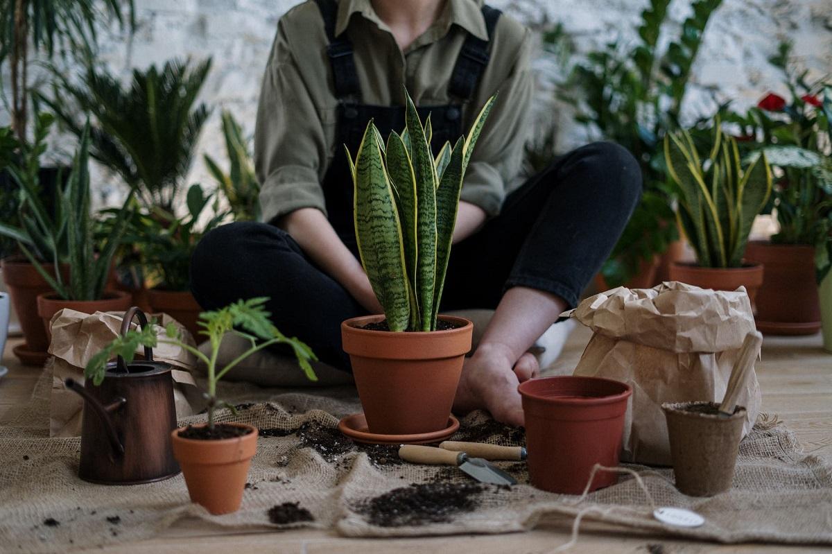 Ventajas de tener plantas
