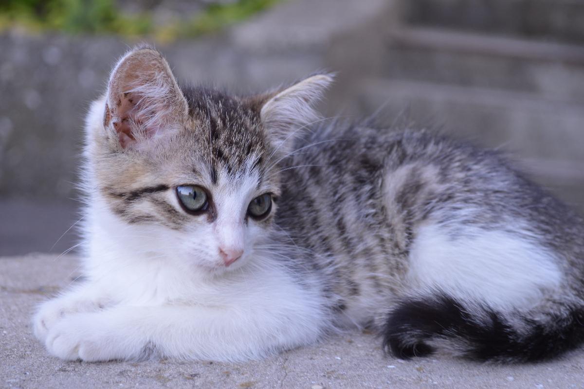 Enfermedades básicas de los gatos