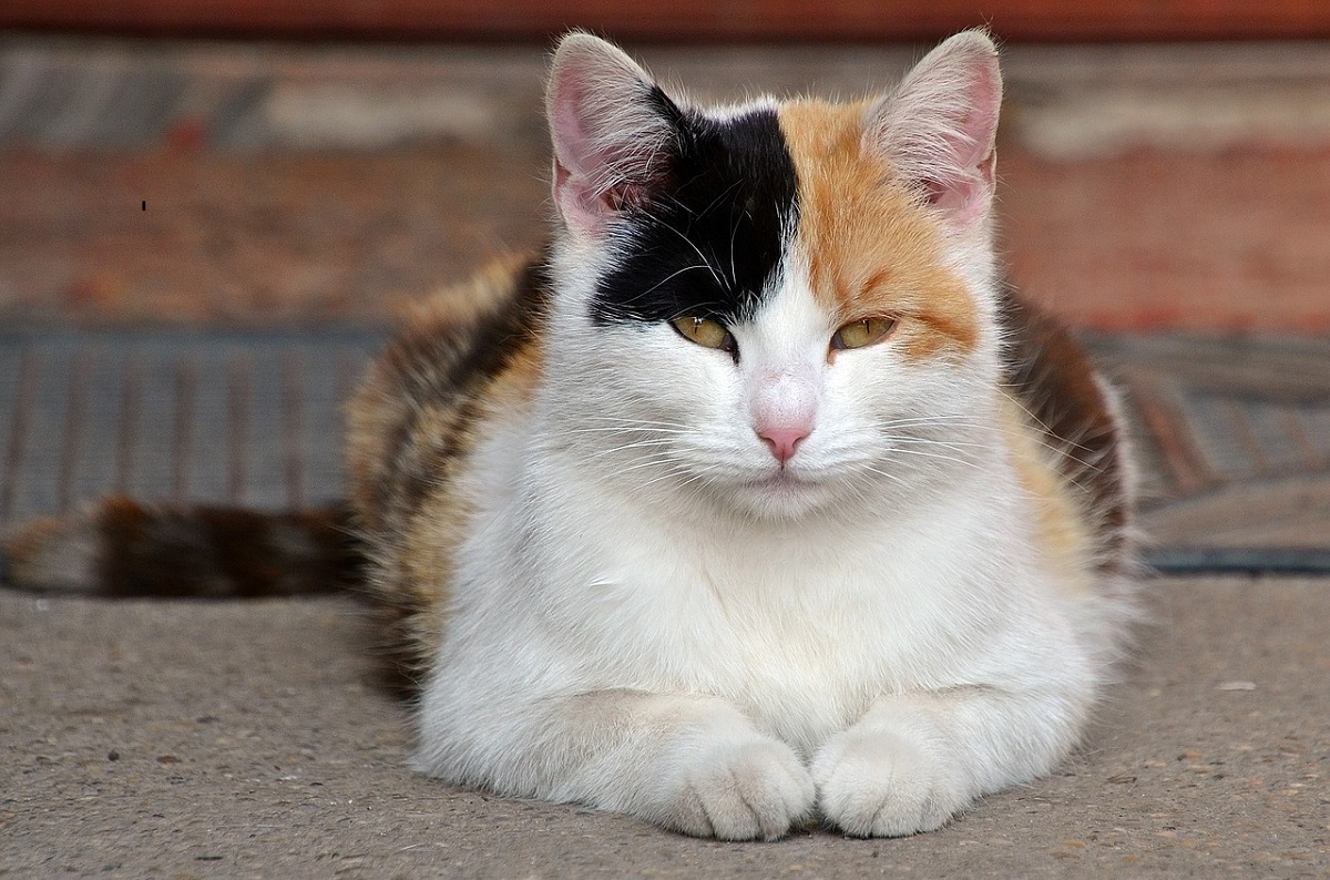Tipos de enfermedades en gatos