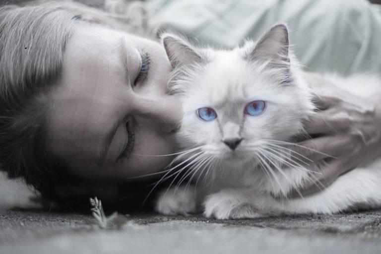 Regañar a tu gato
